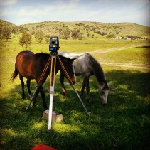 horse-surveying
